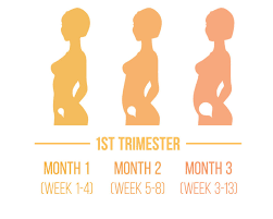 FIRST TRIMESTER OF PREGNANCY post thumbnail image